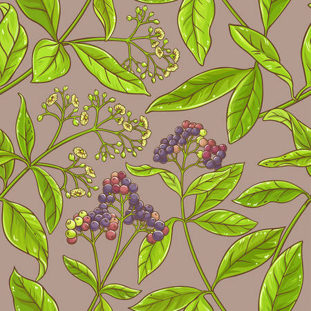 allspice branches pattern on color Illustration