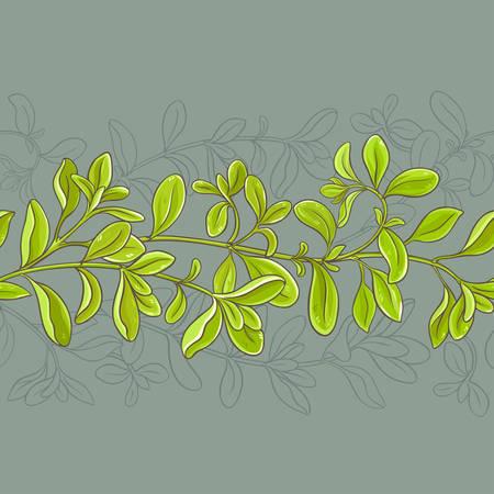 Marjoram leaves vector pattern on color background, vector illustration. Ilustracja