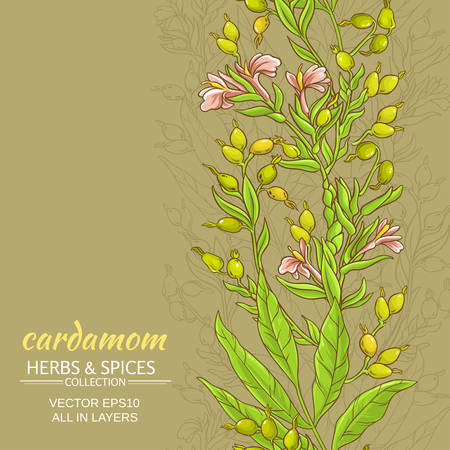 Cardamom branches vector pattern on color background