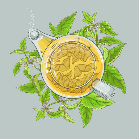 nettle tea in teapot on color background