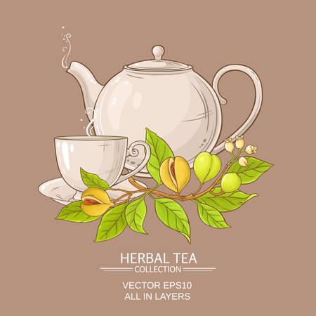 Nutmeg tea vector illustration on colored background