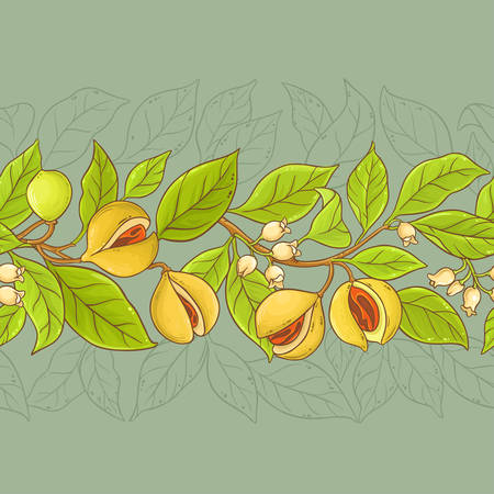 nutmeg branches vector pattern on color background 向量圖像