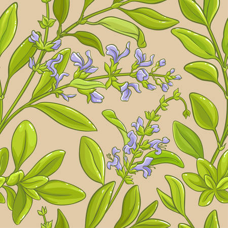 A realistic illustration of sage in a seamless vector pattern background Illustration