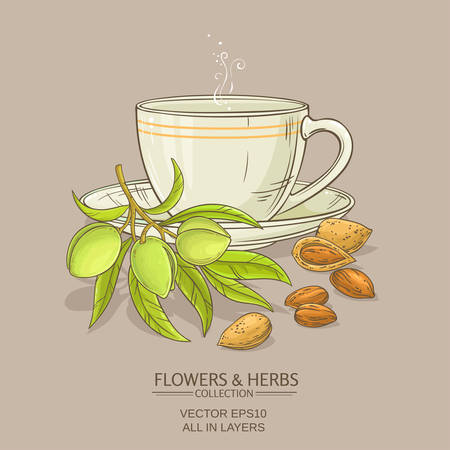 almond tea illustration