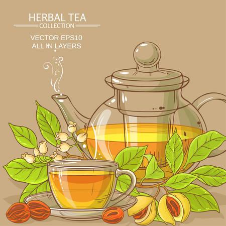 nootmuskaat thee vectorillustratie op kleur achtergrond Vector Illustratie