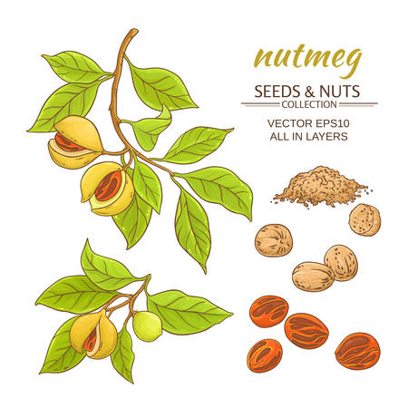 Cartoon sketch of parts of a nutmeg collection vector set, isolated on white