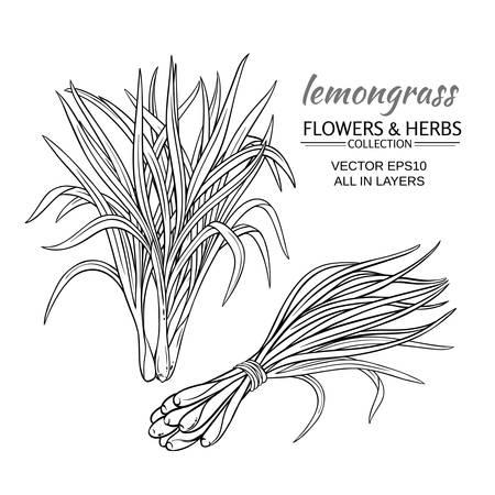 흰색 배경에 설정 된 레몬 그라스 식물 벡터 스톡 콘텐츠 - 91190480