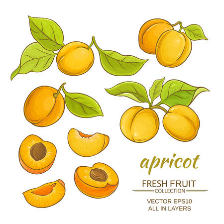 Apricot fruits vector set on white background