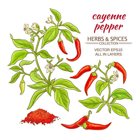cayenne pepper vector set on color background Vettoriali
