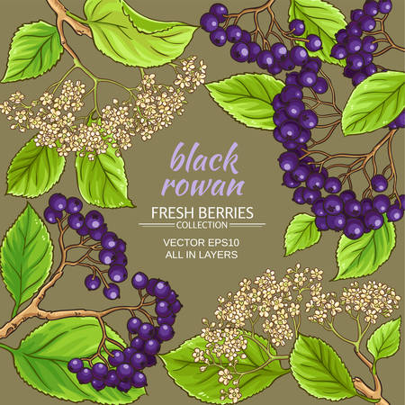 Black rowan frame on color background, vector illustration.