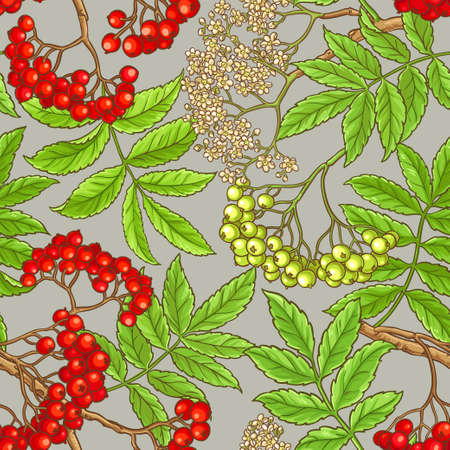 rowan branches vector pattern on color background