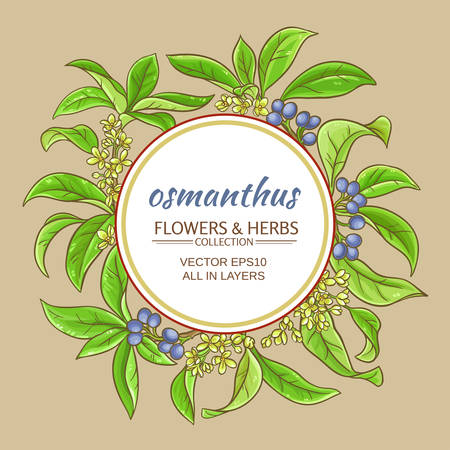 Osmanthus flowers and herbs frame illustration.