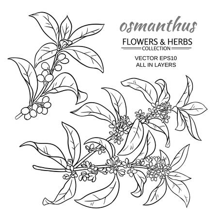 Osmanthus branches vector set on white background