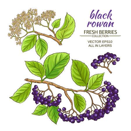 black rowan branches vector set on white background