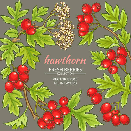 hawthorn branches vector frame on color background