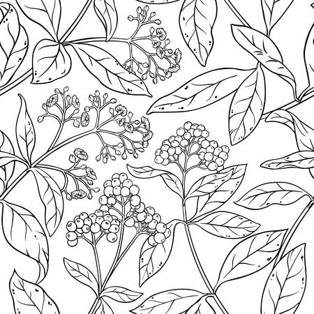 allspice plant seamless pattern on white background