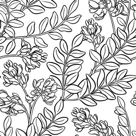 astragalus plant seamless pattern on white background Ilustração