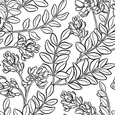 astragalus plant seamless pattern on white background Illustration