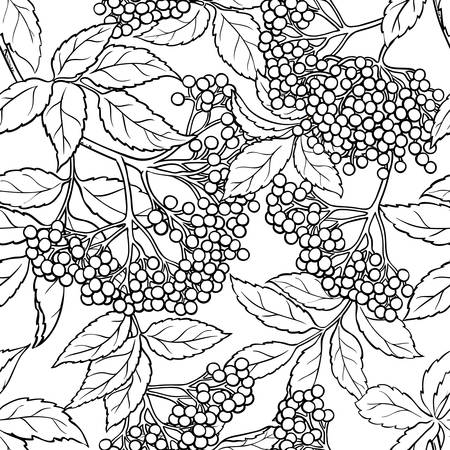 elderberry seamless pattern