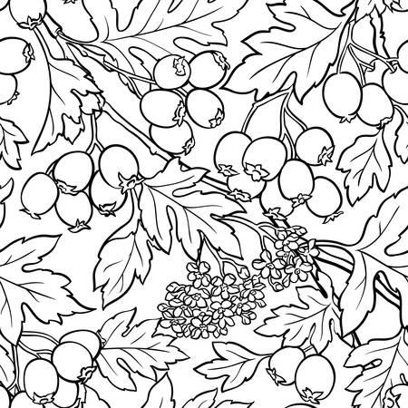 hawthorn seamless pattern