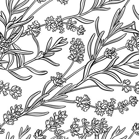 lavender herb seamless pattern on white background Illustration
