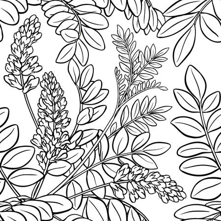 licorice plant seamless pattern on white background