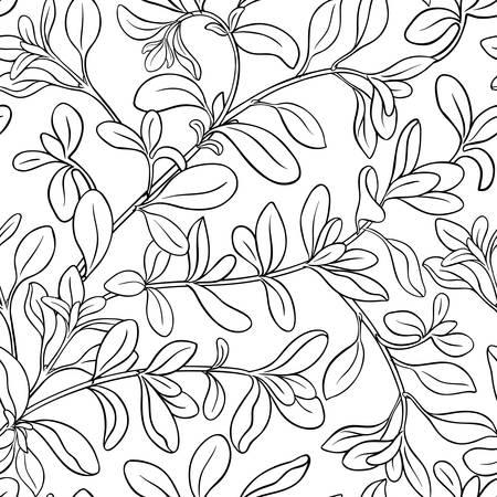 marjoram plant seamless pattern on white background Vettoriali
