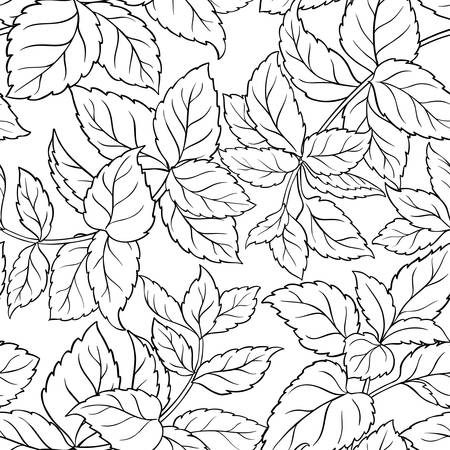 melissa herb seamless pattern on white background Illustration