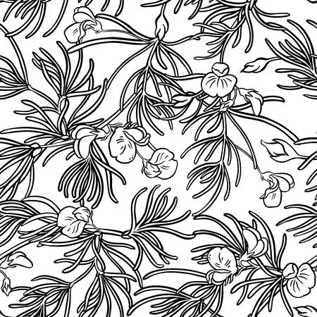 rooibos seamless pattern illustration.