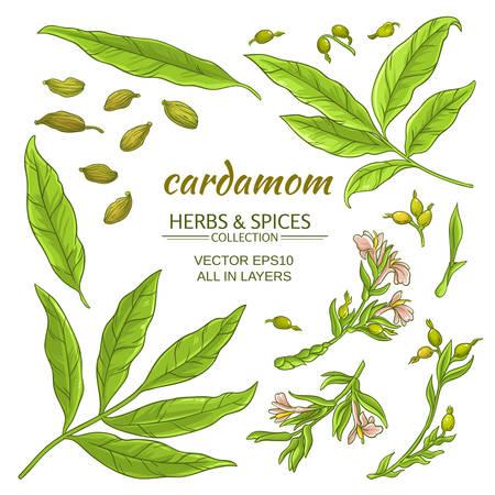 Cardamom elements set Illustration