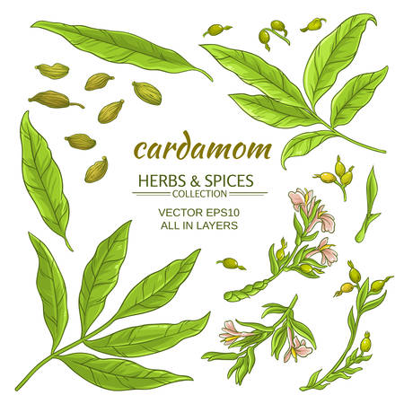 Cardamom elements set Illustration