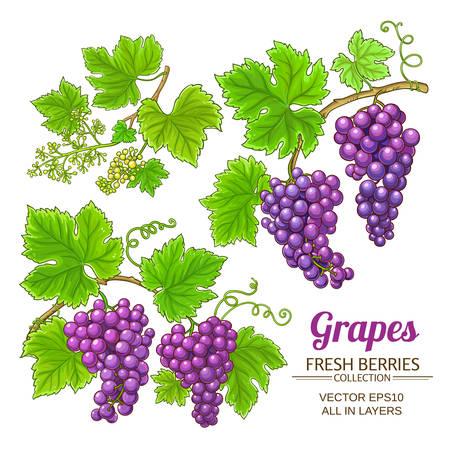 grapes vector set