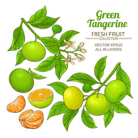 green tangerine vector
