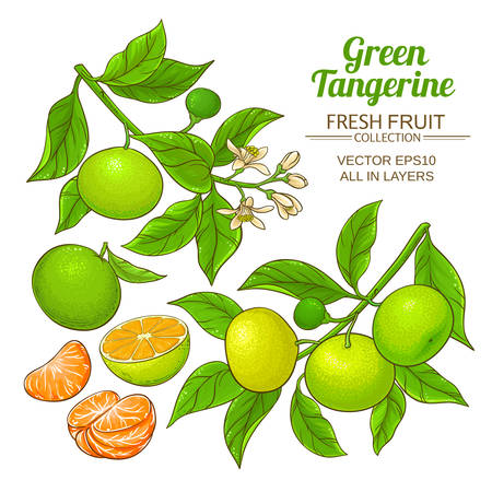 green tangerine vector