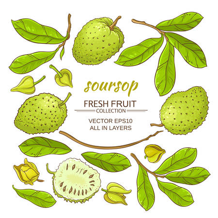 Soursop elements set vector illustration