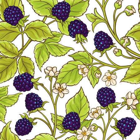Blackberry vector pattern
