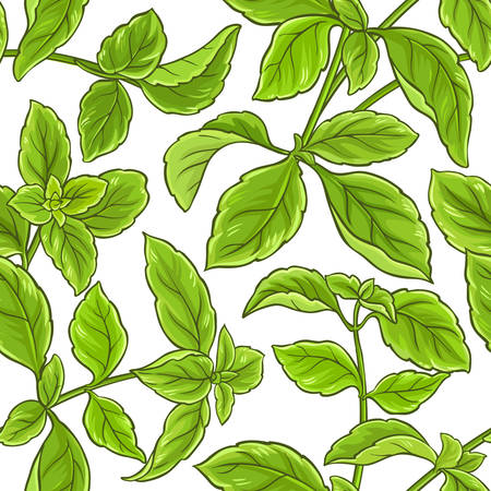 Basil plant vector pattern 스톡 콘텐츠 - 96287266
