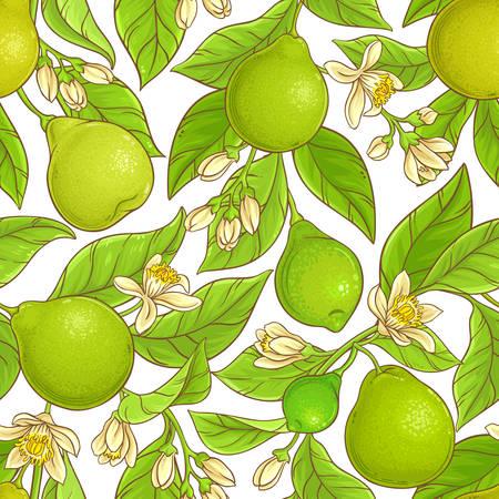 Bergamot vector pattern Illustration