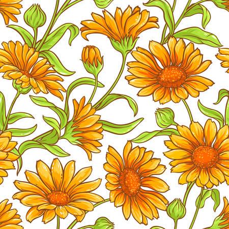 Calendula flower vector seamless pattern.