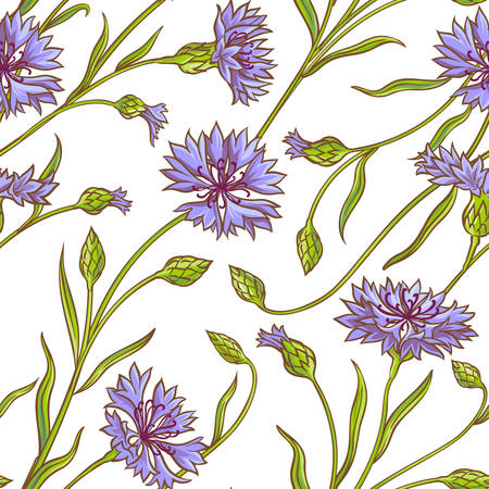 A cornflower plant vector pattern on white background