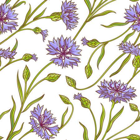 A cornflower plant vector pattern on white background