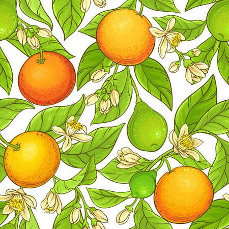 grapefruit branch vector pattern Stock Photo