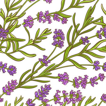 A lavender plant vector pattern on white background Illustration