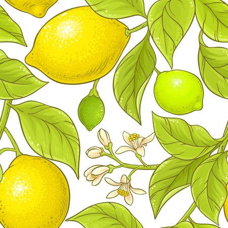 A lemon branch vector pattern on white background