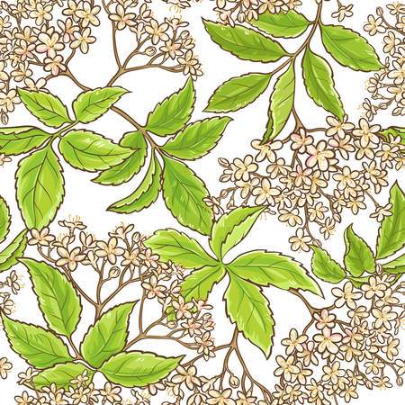 Elderberry branch vector pattern.