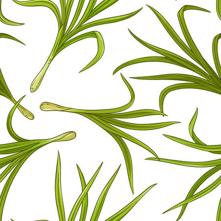 A lemongrass plant vector pattern on white background Stock Illustratie