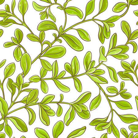 marjoram branch  pattern on white background, Vector illustration.