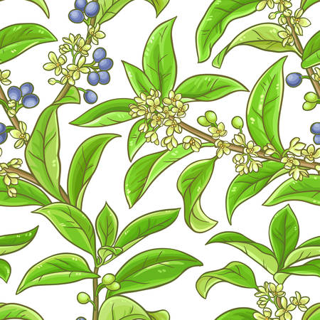 osmanthus  pattern on white background, Vector illustration.