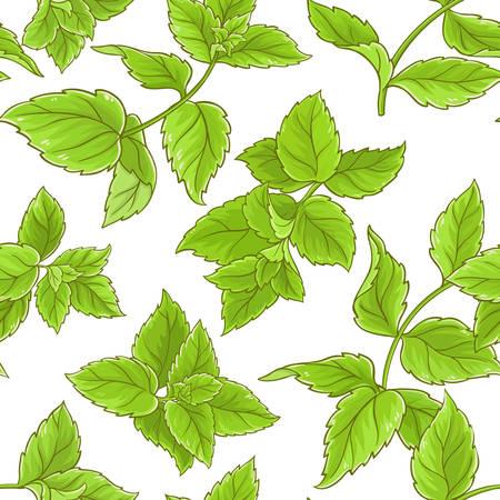 peppermint  pattern on white background, Vector illustration. Illustration