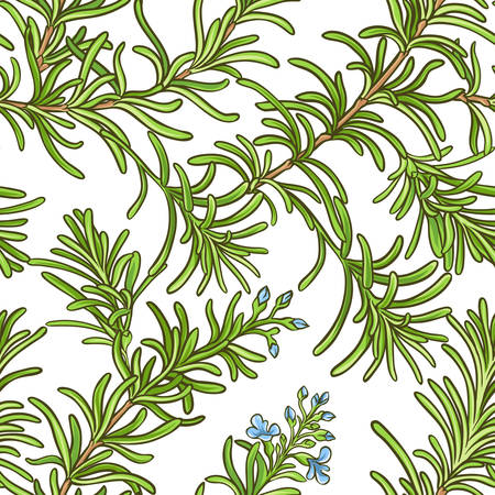 Rosemary branch vector pattern 矢量图像